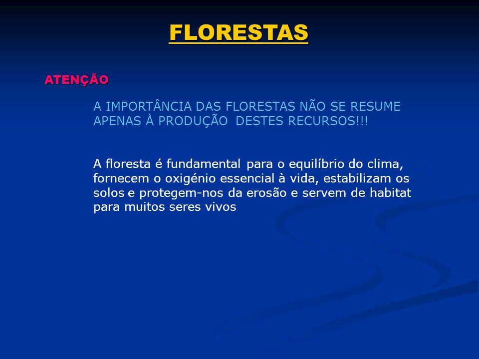 FLORESTAS ATENÇÃO. A IMPORTÂNCIA DAS FLORESTAS NÃO SE RESUME APENAS À PRODUÇÃO DESTES RECURSOS!!!