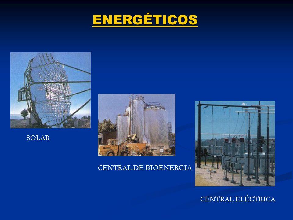 ENERGÉTICOS SOLAR CENTRAL DE BIOENERGIA CENTRAL ELÉCTRICA