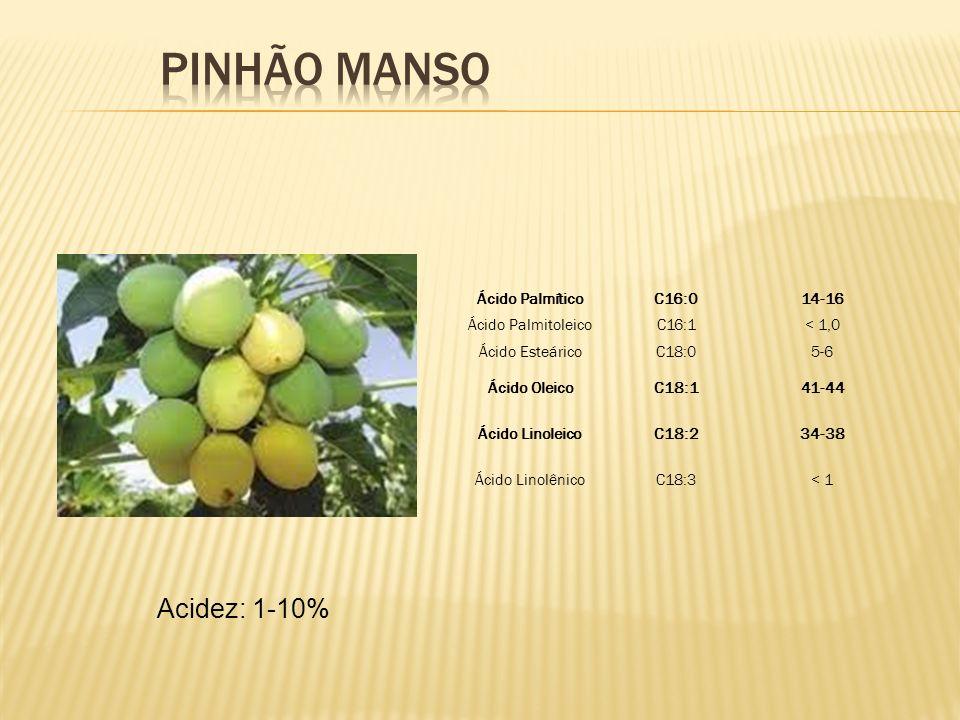 PINHÃO MANSO Acidez: 1-10% Ácido Palmítico C16:0 14-16