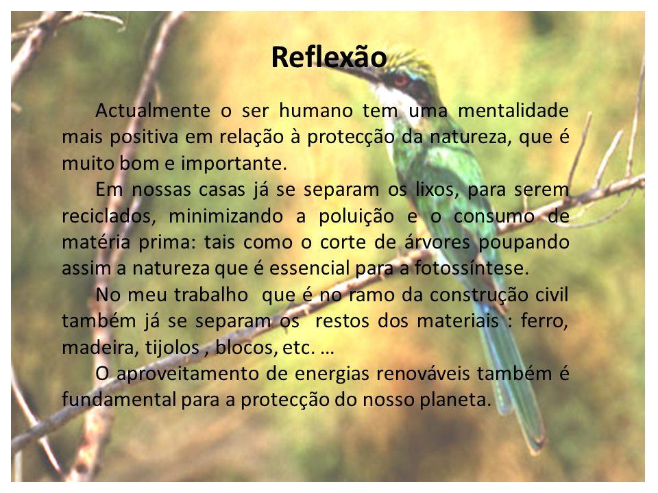 ReflexãoActualmente o ser humano tem uma mentalidade mais positiva em relação à protecção da natureza, que é muito bom e importante.