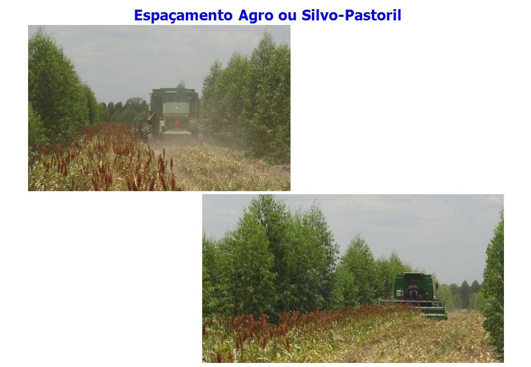 Espaçamento Agro ou Silvo-Pastoril