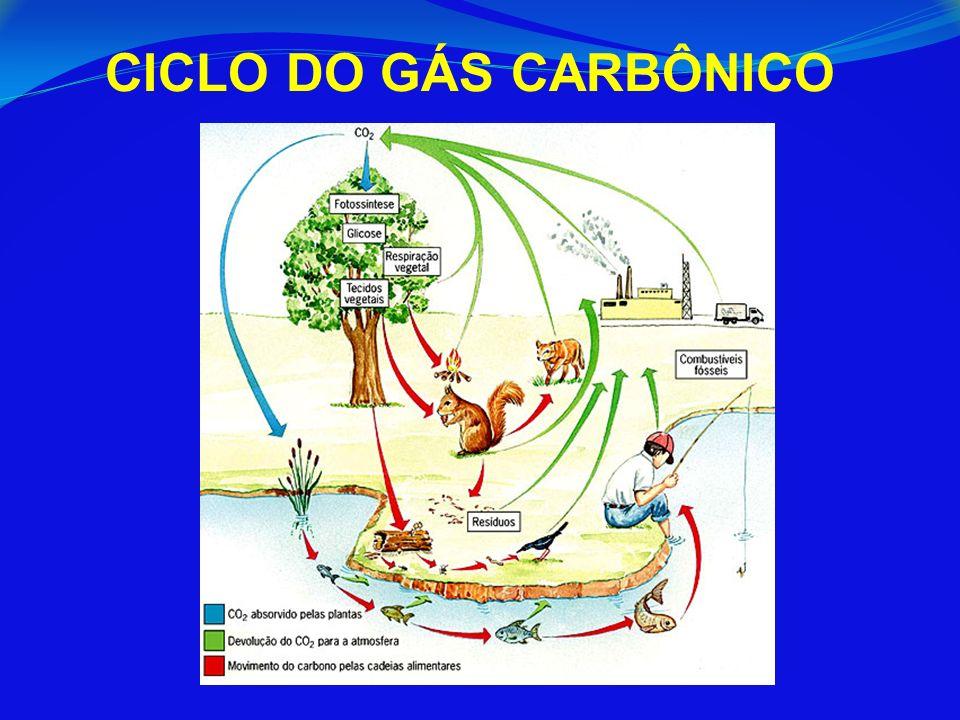 CICLO DO GÁS CARBÔNICO