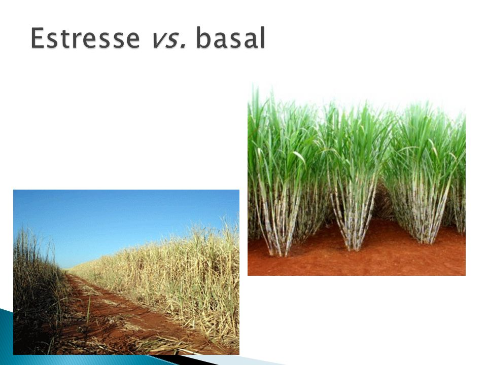 Estresse vs. basal