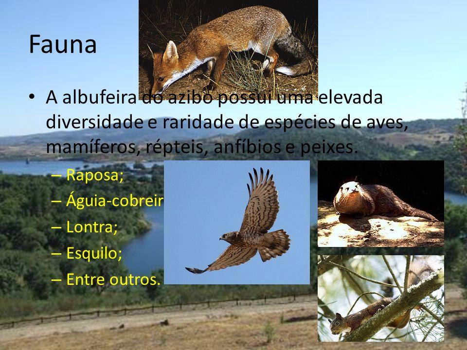 Fauna A albufeira do azibo possui uma elevada diversidade e raridade de espécies de aves, mamíferos, répteis, anfíbios e peixes.