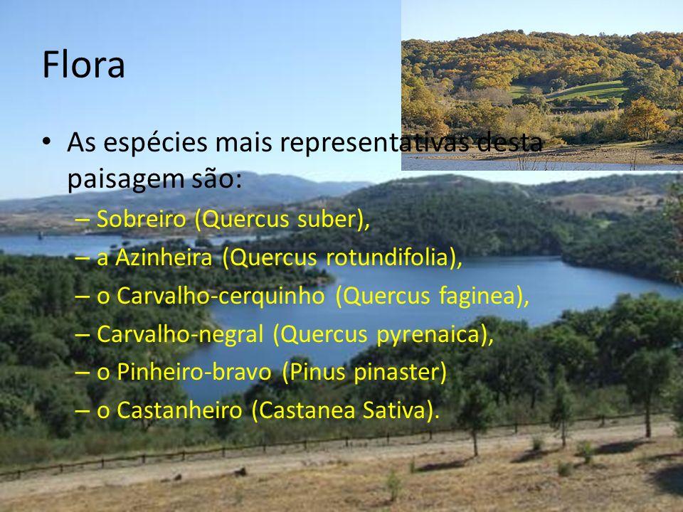 Flora As espécies mais representativas desta paisagem são: