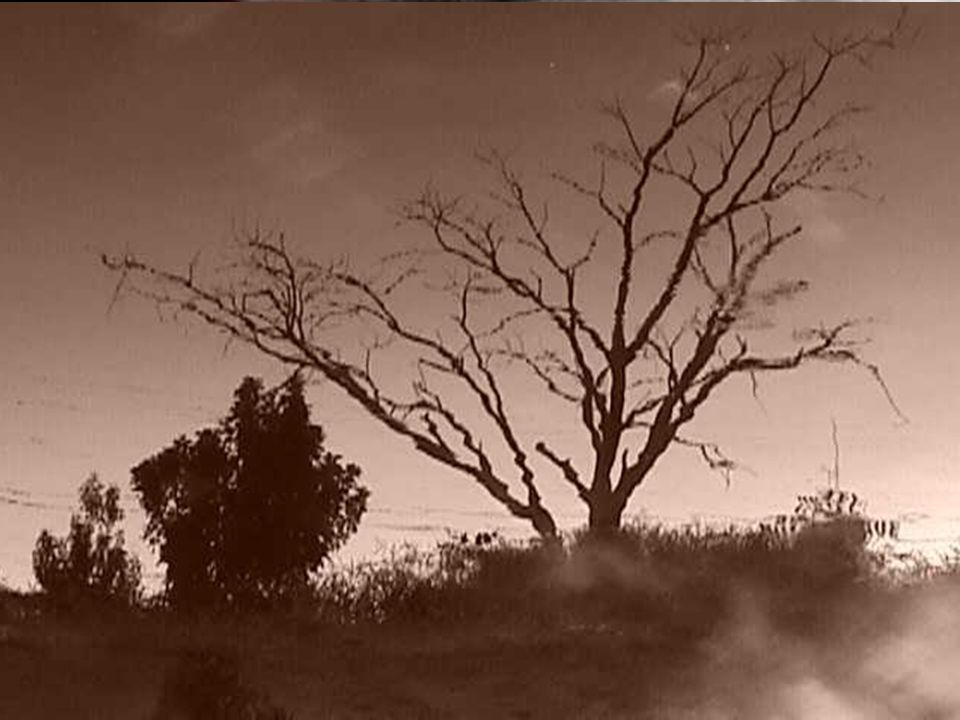 Você cortou as árvores que dão sombra, ar e equilibrio.