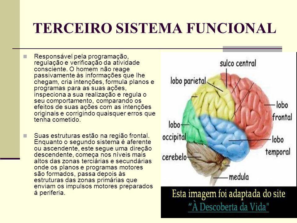 TERCEIRO SISTEMA FUNCIONAL