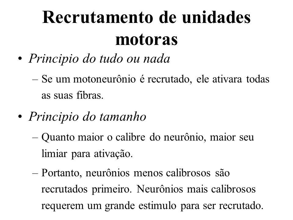 Recrutamento de unidades motoras