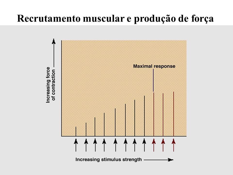 Recrutamento muscular e produção de força