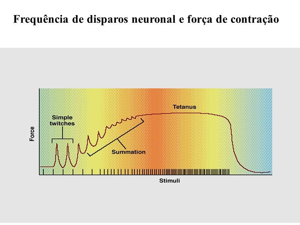 Frequência de disparos neuronal e força de contração