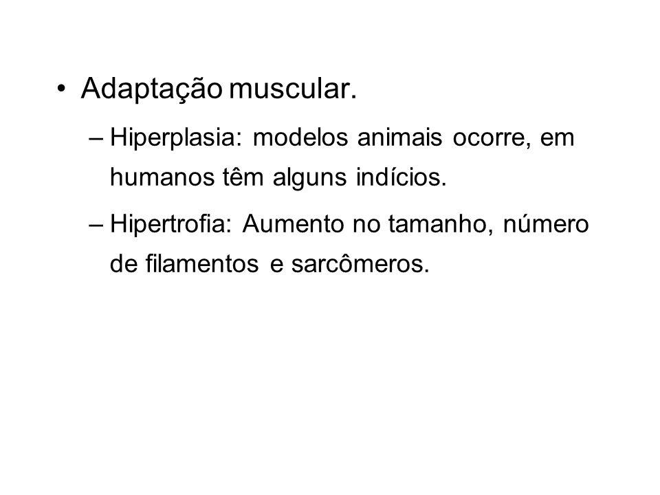 Adaptação muscular. Hiperplasia: modelos animais ocorre, em humanos têm alguns indícios.