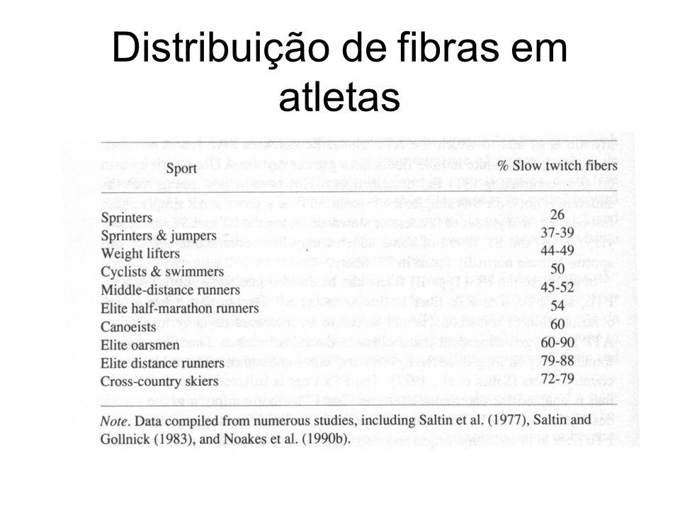 Distribuição de fibras em atletas