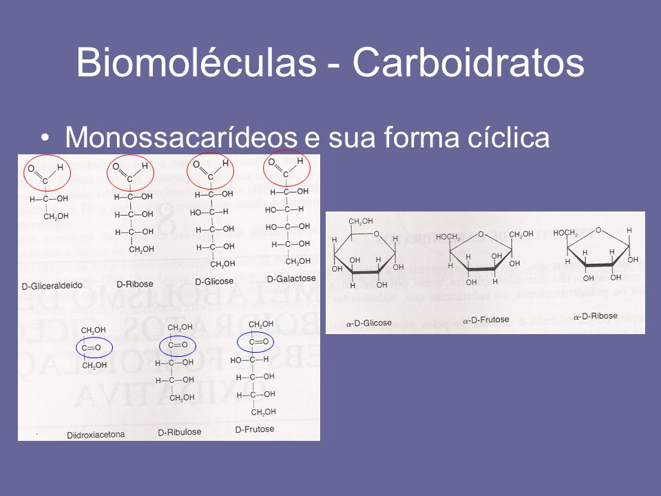 Biomoléculas - Carboidratos