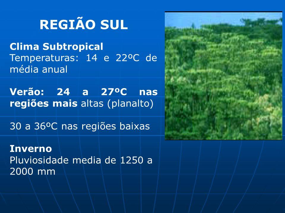 REGIÃO SUL Clima Subtropical Temperaturas: 14 e 22ºC de média anual