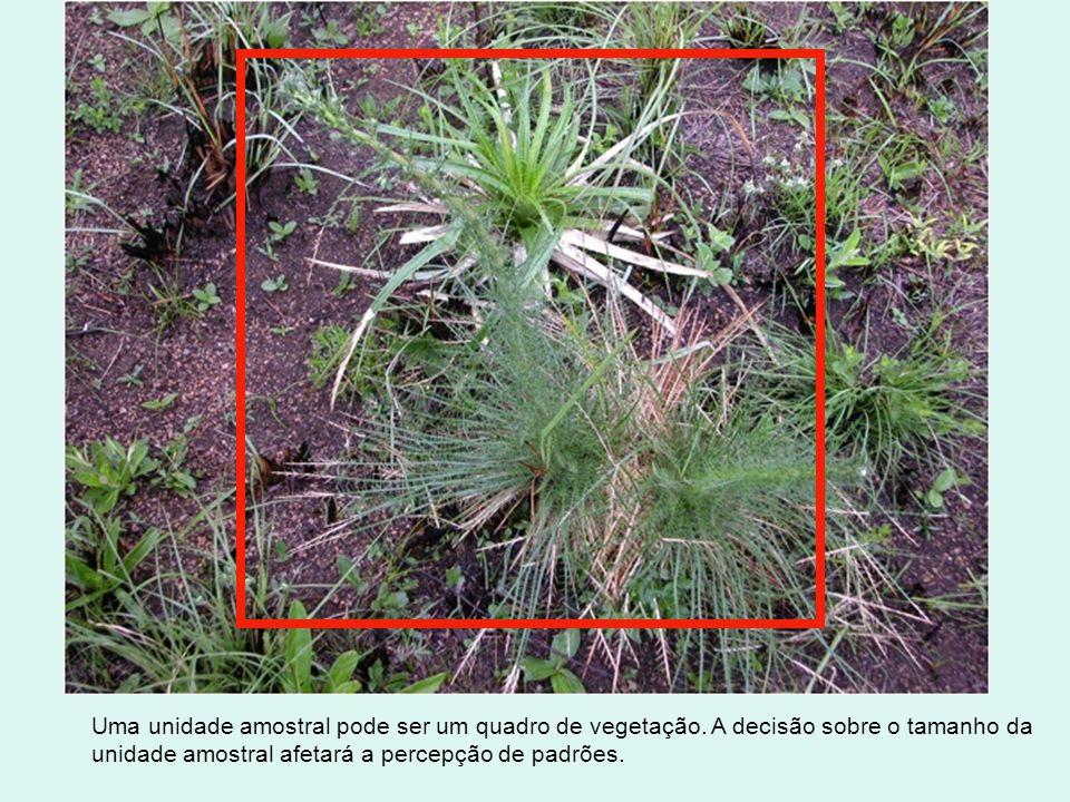 Uma unidade amostral pode ser um quadro de vegetação