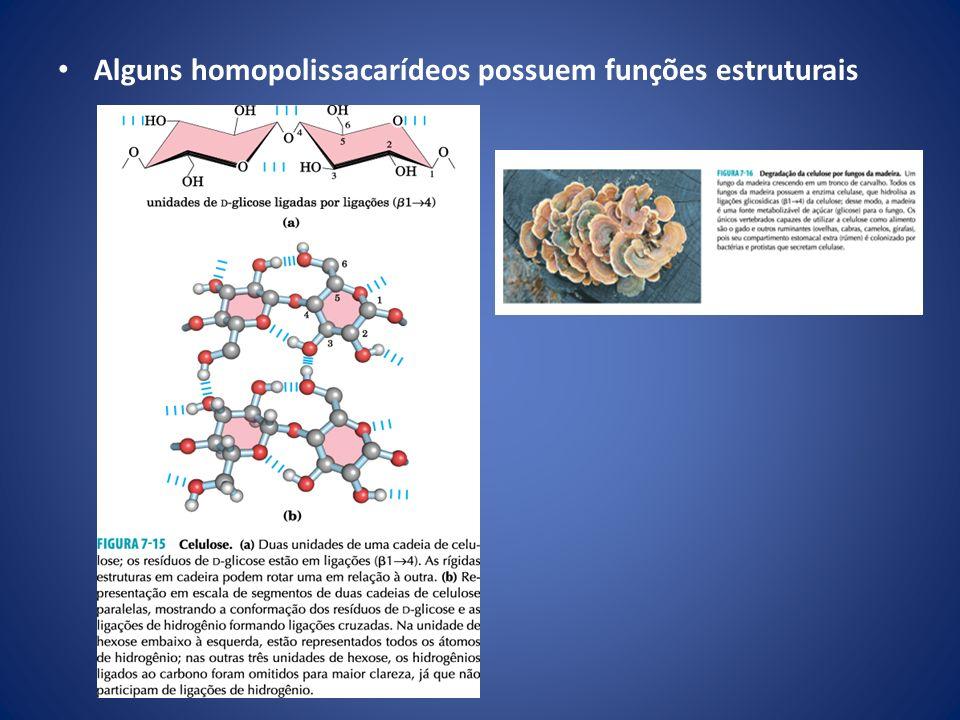 Alguns homopolissacarídeos possuem funções estruturais