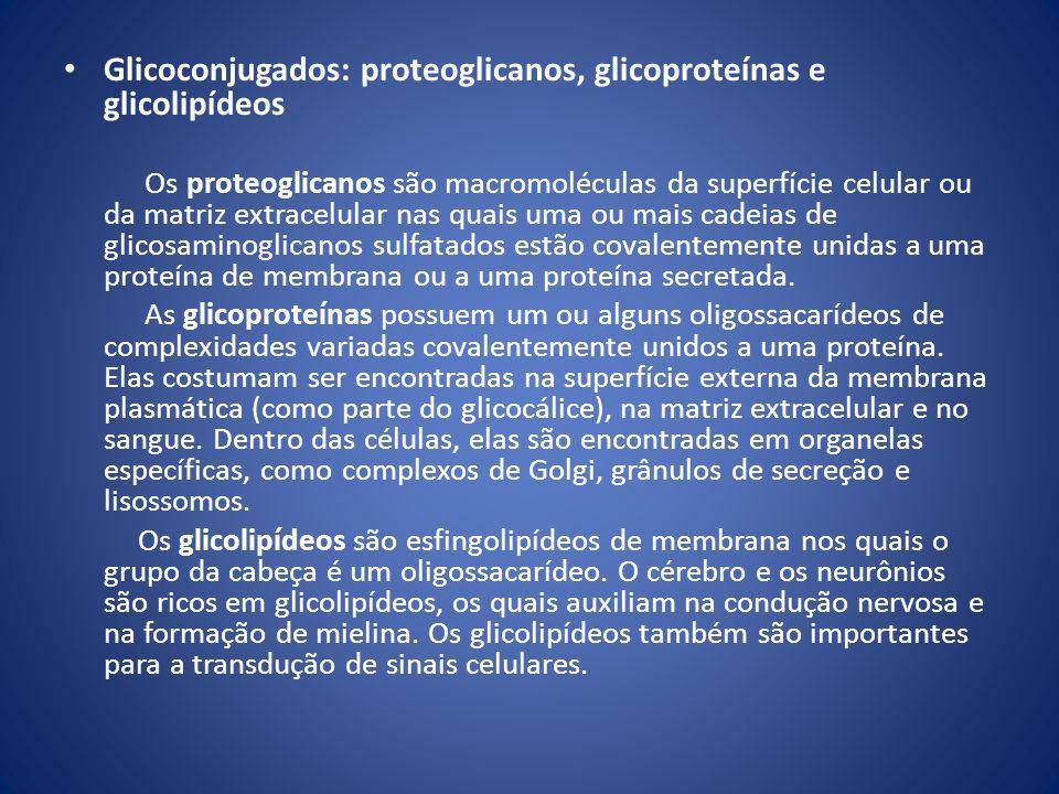 Glicoconjugados: proteoglicanos, glicoproteínas e glicolipídeos