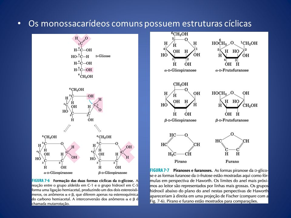 Os monossacarídeos comuns possuem estruturas cíclicas