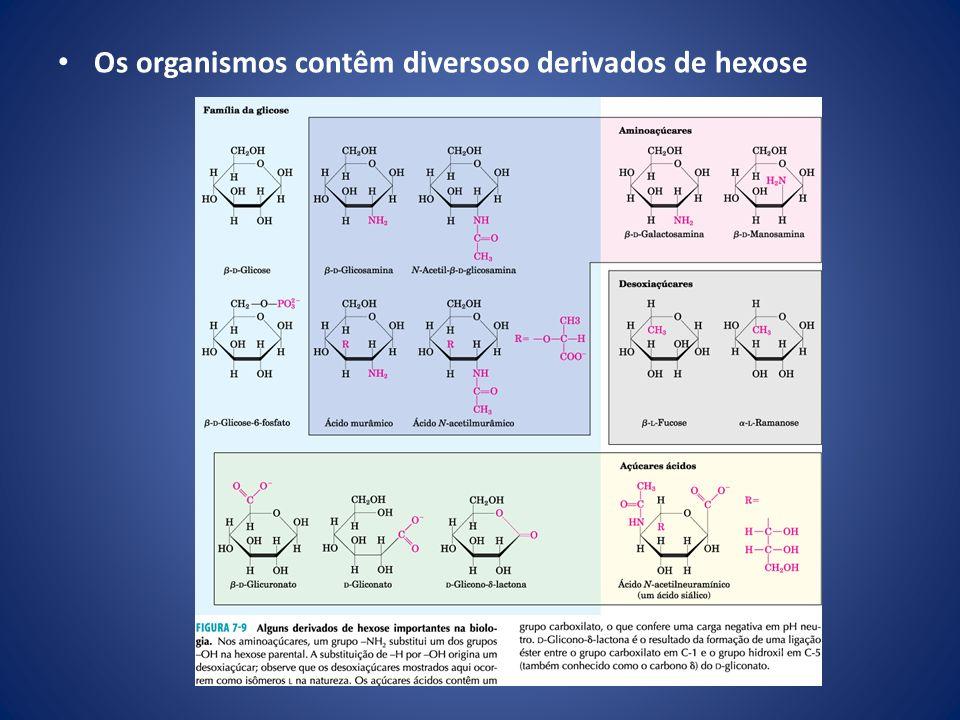 Os organismos contêm diversoso derivados de hexose