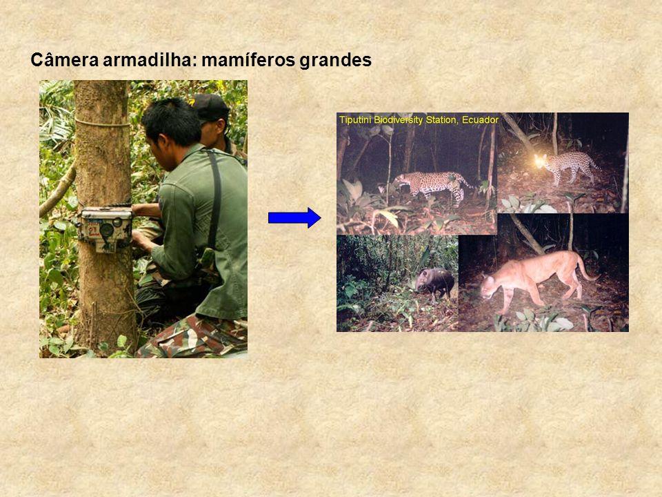 Câmera armadilha: mamíferos grandes