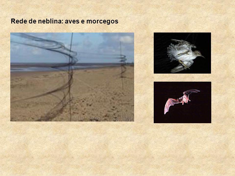 Rede de neblina: aves e morcegos