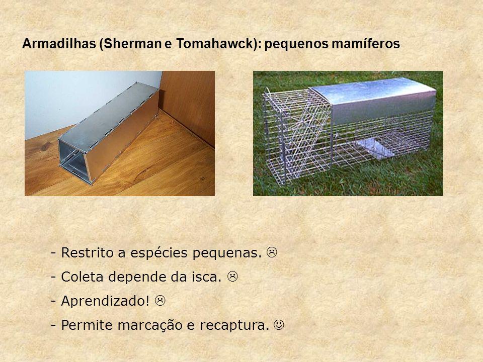 Armadilhas (Sherman e Tomahawck): pequenos mamíferos