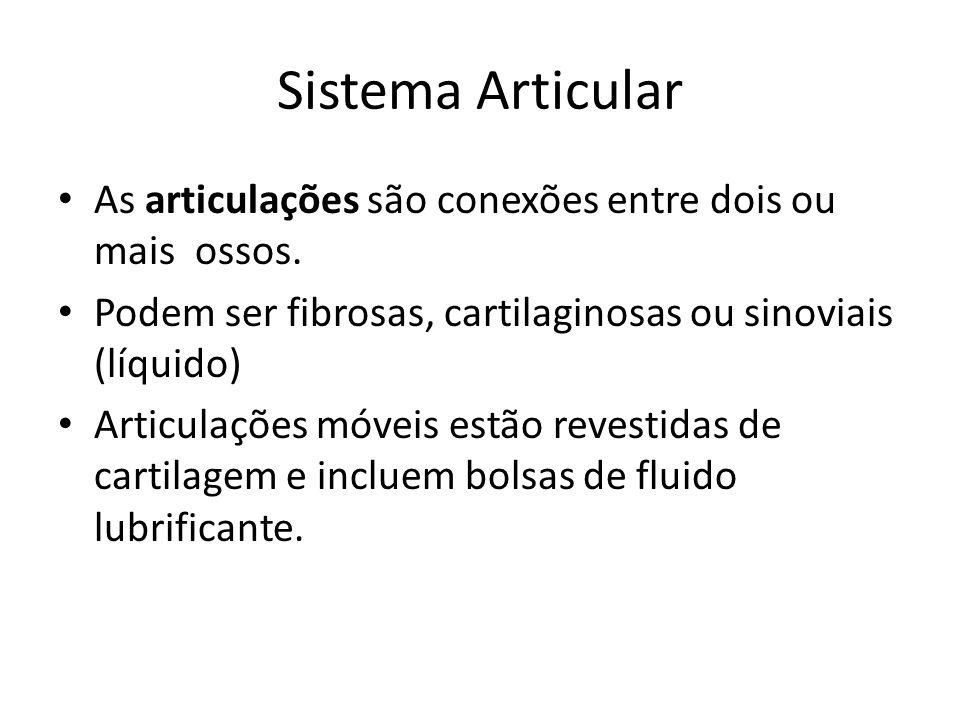Sistema Articular As articulações são conexões entre dois ou mais ossos. Podem ser fibrosas, cartilaginosas ou sinoviais (líquido)