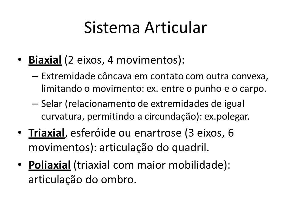 Sistema Articular Biaxial (2 eixos, 4 movimentos):