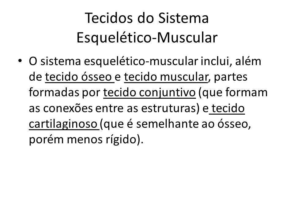 Tecidos do Sistema Esquelético-Muscular