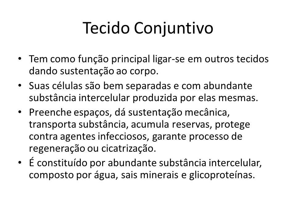 Tecido Conjuntivo Tem como função principal ligar-se em outros tecidos dando sustentação ao corpo.
