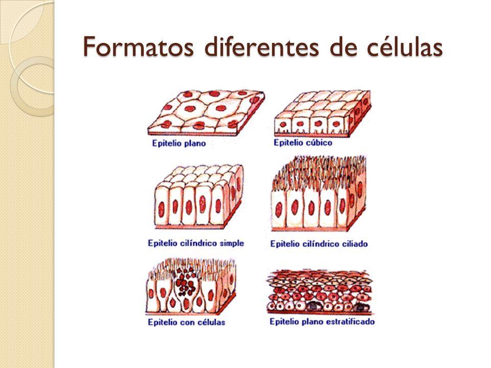 Formatos diferentes de células