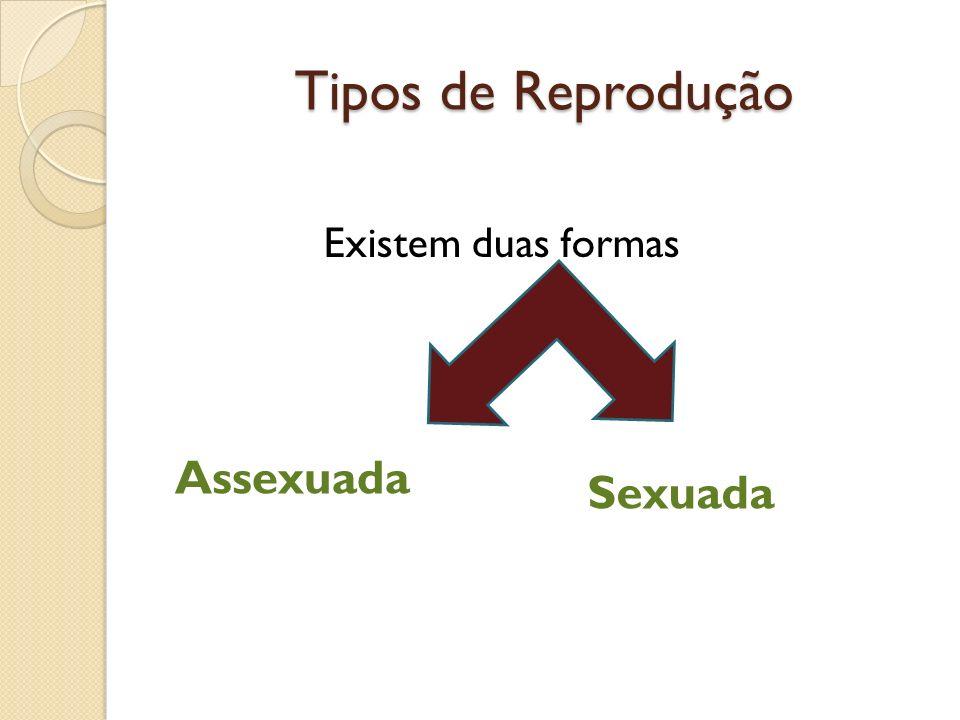 Tipos de Reprodução Existem duas formas Assexuada Sexuada