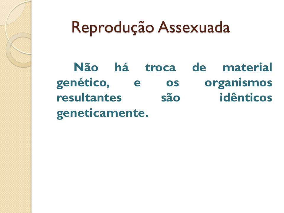Reprodução Assexuada Não há troca de material genético, e os organismos resultantes são idênticos geneticamente.