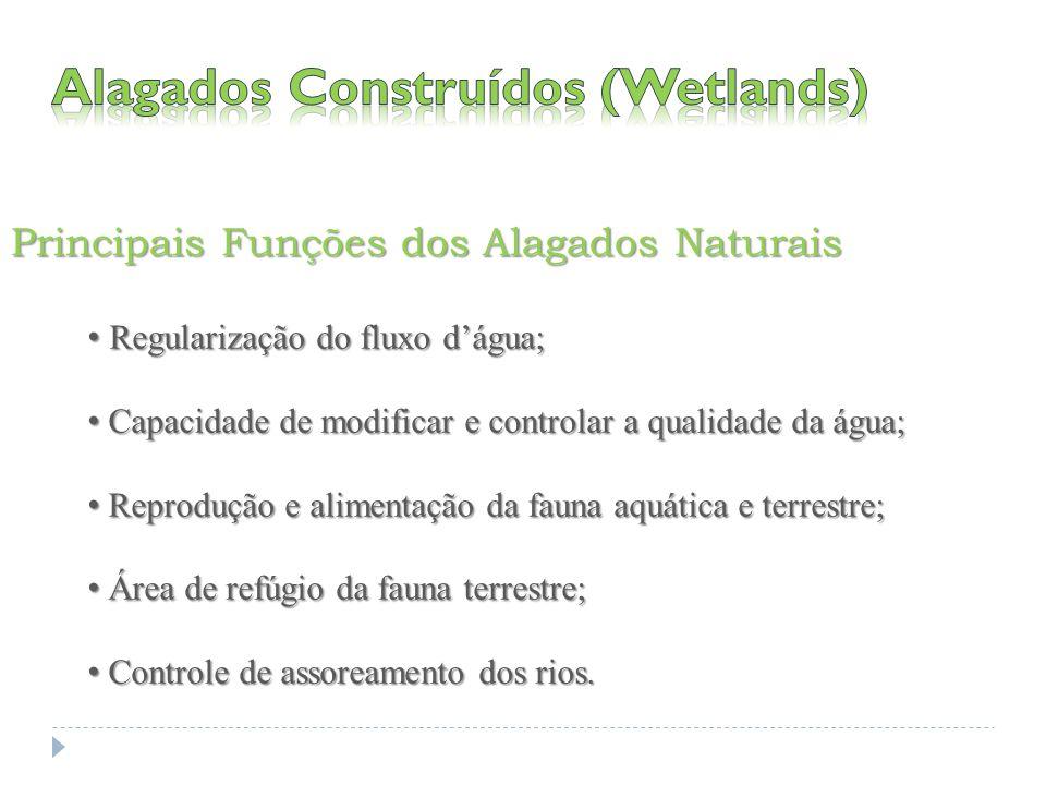 Principais Funções dos Alagados Naturais