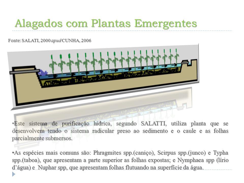 Alagados com Plantas Emergentes