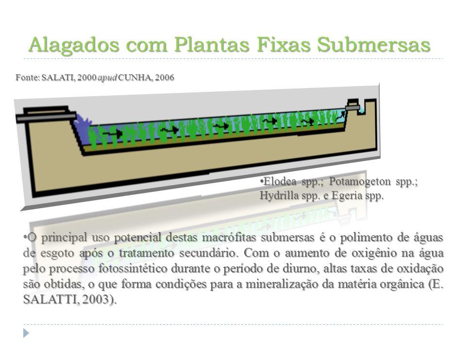 Alagados com Plantas Fixas Submersas
