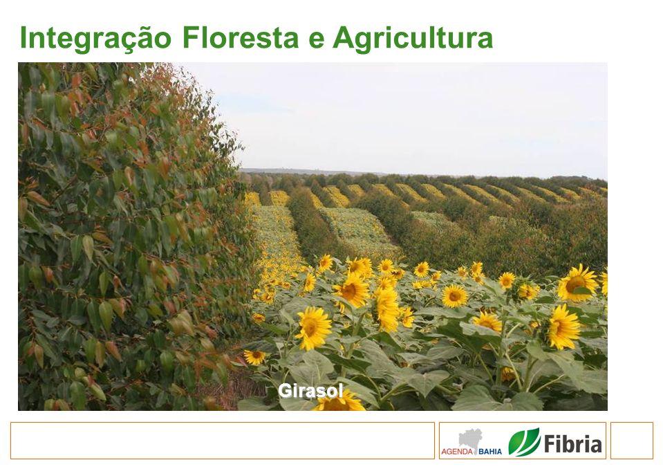 Integração Floresta e Agricultura
