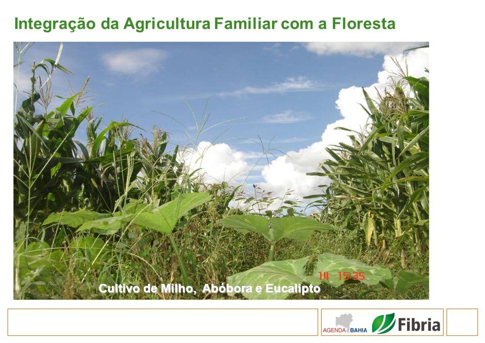 Integração da Agricultura Familiar com a Floresta