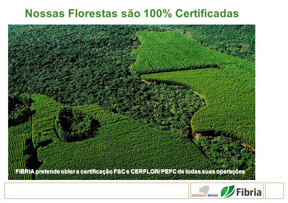 Nossas Florestas são 100% Certificadas