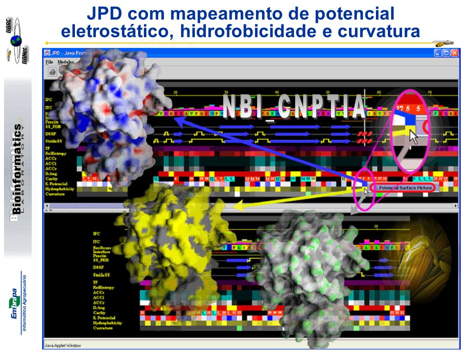 JPD com mapeamento de potencial eletrostático, hidrofobicidade e curvatura