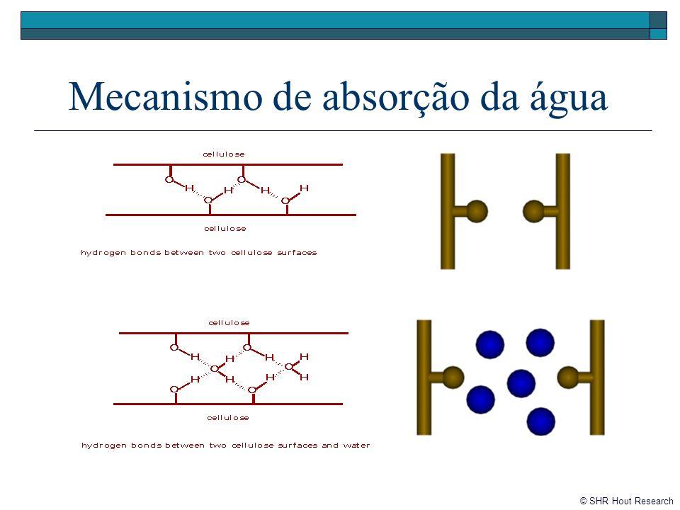 Mecanismo de absorção da água