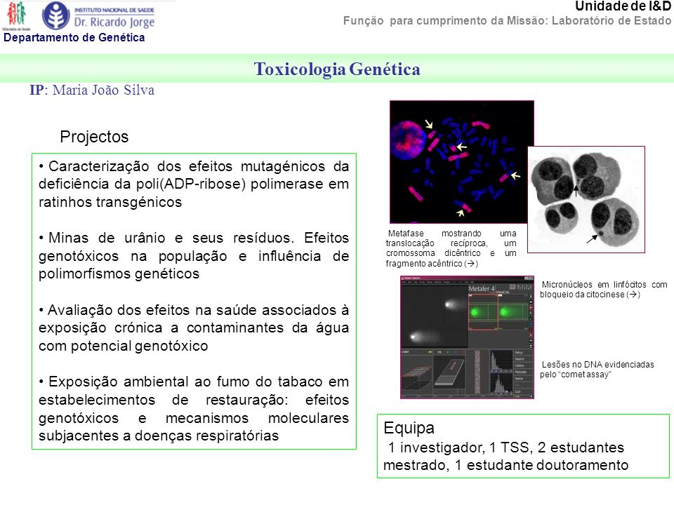 Toxicologia Genética Projectos Equipa IP: Maria João Silva