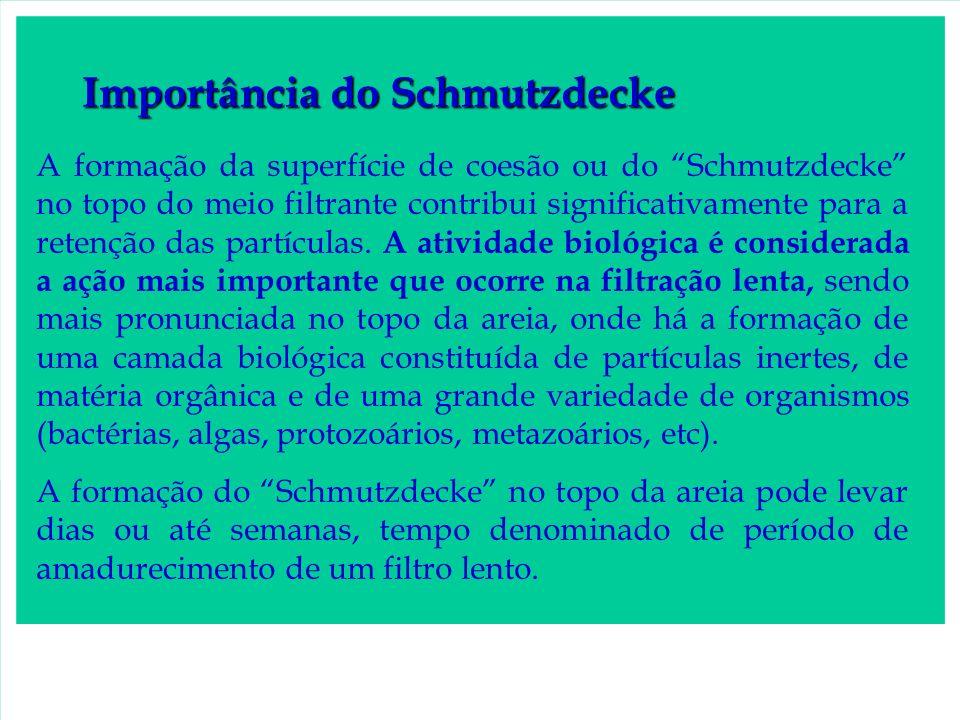 Importância do Schmutzdecke