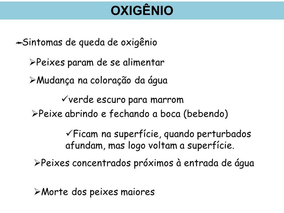 OXIGÊNIO Sintomas de queda de oxigênio Peixes param de se alimentar