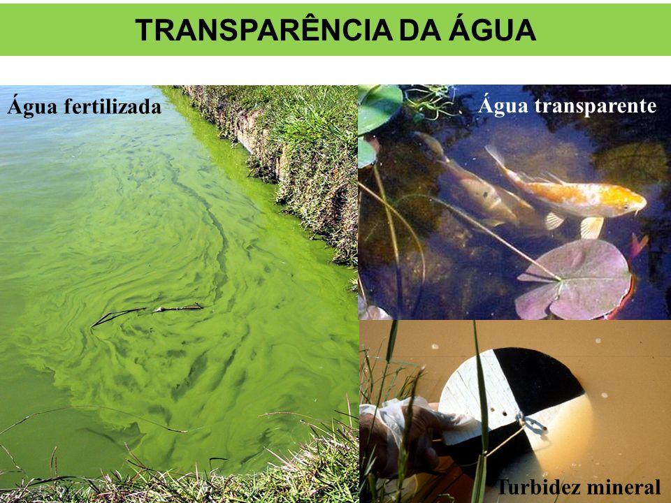 TRANSPARÊNCIA DA ÁGUA Água fertilizada Água transparente Clear water
