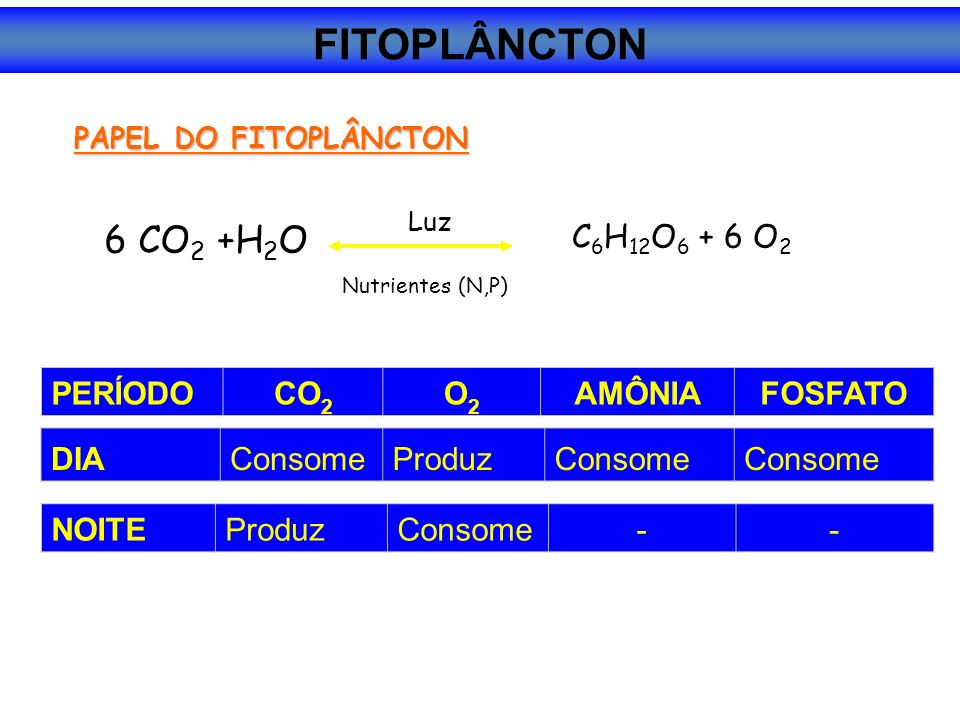 FITOPLÂNCTON 6 CO2 +H2O C6H12O6 + 6 O2 PERÍODO CO2 O2 AMÔNIA FOSFATO