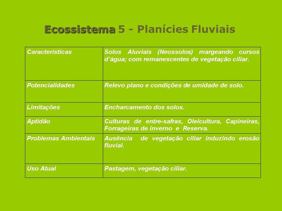 Ecossistema 5 - Planícies Fluviais