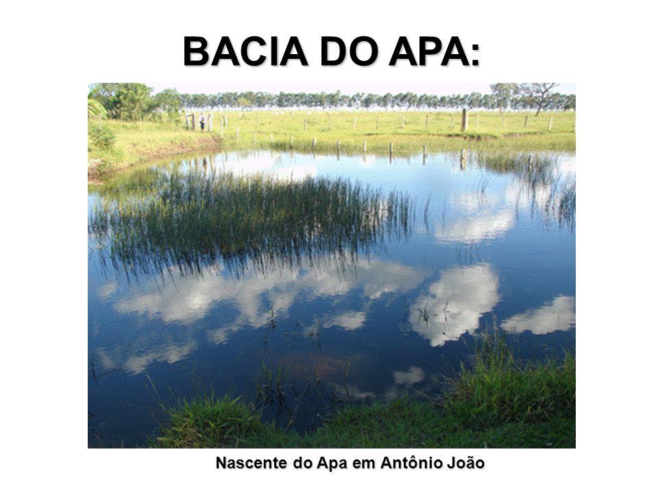 BACIA DO APA: Nascente do Apa em Antônio João