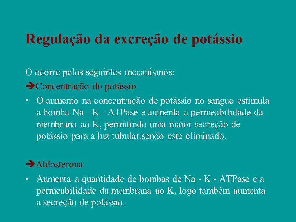 Regulação da excreção de potássio