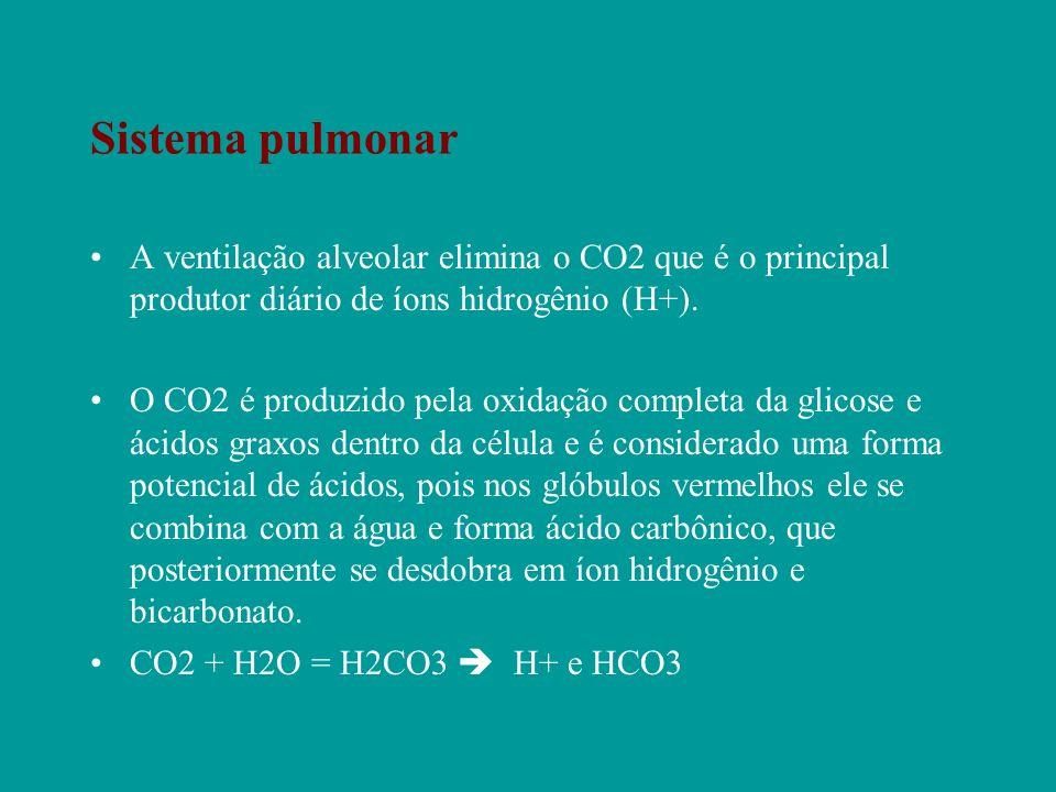 Sistema pulmonar A ventilação alveolar elimina o CO2 que é o principal produtor diário de íons hidrogênio (H+).